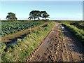TF4550 : Farm track near Wrangle by Dave Hitchborne