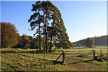 TL8162 : Cottage in Ickworth Park by Bob Jones