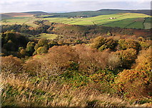SK2078 : Woodland above Bretton Clough by Roger Temple