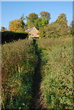 SK2375 : Through the nettles to Stoney Middleton by Roger Temple
