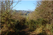 SK2375 : Through the gorse to Stoney Middleton by Roger Temple