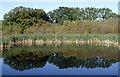 SE7830 : Eastrington Ponds Nature Reserve by Paul Glazzard