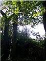 SU0522 : High seat near Knighton Wood by Maigheach-gheal
