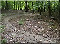 SU6883 : Cycle track in Busgrove Wood by Graham Horn