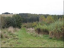 NT5042 : Wooplaw Community Woodlands by Richard Webb
