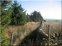 SD7657 : Wall enclosing Part of Gisburn Forest by Chris Heaton