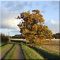 TL2354 : Golden oak by Jonathan Billinger