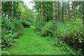 TF0902 : Bushey Wood, near Southorpe by Julian Dowse