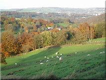 SE0421 : Woods near Kebroyd by John Illingworth