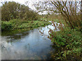 TF8015 : River Nar west of Castle Acre by Robert Walden