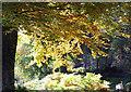 NC5701 : Autumn by the Shin at  Achany Glen by sylvia duckworth