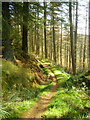 NY5086 : Cycle Trail in Newcastleton Forest by Iain Thompson