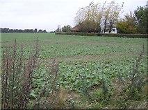 SU4773 : Crops south of Church Farm by Graham Horn