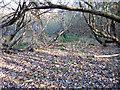 TL7584 : Willow carr, Brandon, Suffolk by Rodney Burton