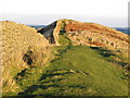 NY7467 : Hadrian's Wall above Winshield Crags by Mike Quinn