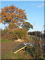 TM0755 : Field corner near Badley track with autumnal tree by Andrew Hill