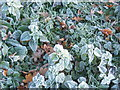 TM0755 : Frosted vegetation by Andrew Hill