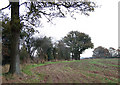 SO6489 : Farmland near Neenton Heath, Shropshire by Roger  Kidd