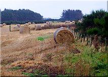 NH8480 : Near Lochslin by sylvia duckworth