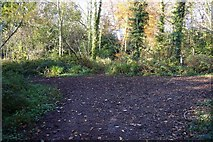SX5857 : Junction of footpaths in Walks Brake wood by Nigel Mole