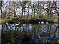 SM9825 : Duck pond at Rinaston by ceridwen