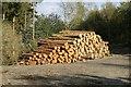 SO4281 : Logging in Stoke Wood by Jeff Buck