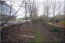 SX5656 : Path behind Langage Science Park by Nigel Mole