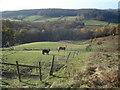 SO7450 : Horse paddocks at Birchwood Common by Trevor Rickard