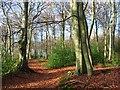 SU7384 : Lambridge Wood by Andrew Smith