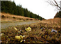 NX1270 : Forest road with brussels sprouts by David Baird