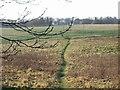 TR2748 : Footpath to Shepherdswell by Nick Smith