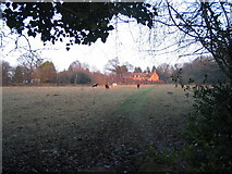 SP3177 : Grazing cattle by Canley Ford by E Gammie