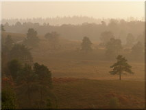 SU2609 : Valley between Acres Down and Wick Wood, New Forest by Jim Champion