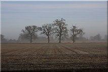 TL8063 : 7 Acre Field, Little Saxham by Bob Jones