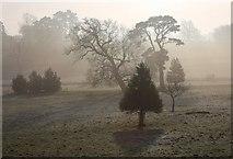 TL8162 : Misty trees in Ickworth Park by Bob Jones
