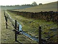 NY5329 : Stream and pasture, Carleton by Andrew Smith