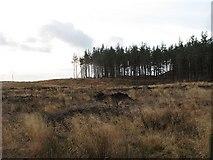 NN7754 : Braes of Foss Forest by Richard Webb