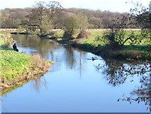 TQ0357 : Abbey Stream by Colin Smith