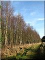 TG1140 : Footpath to Highborough Farm by Evelyn Simak