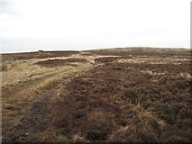 NT7153 : Lamb Rig by Richard Webb