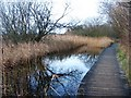 TL4045 : Dipping Pond or Boardwalk Pond by Sandy B