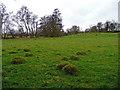 SO8139 : Anthills in pasture by Jonathan Billinger