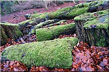 J4681 : Fallen trees, Crawfordsburn Glen by Albert Bridge