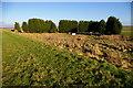 TF5608 : Coniferous enclosure by Ben Harris