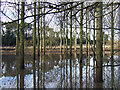 SO8688 : Floods by Smestow Brook, Greensforge, Staffordshire by Roger  Kidd