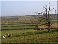 SP7521 : Pastures, Quainton by Andrew Smith