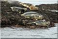NB9608 : Seals on Rocks Eilean a' Chàr Summer Isles by Peter Gamble