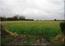 SU7251 : Field view by Sandy B