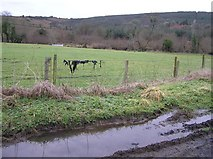 H1871 : Lugmore Townland by Kenneth  Allen