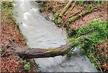 J4681 : Fallen tree, Crawfordsburn glen by Albert Bridge